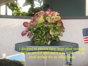 Floating Wall Shelf with Plant