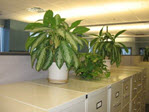 Plants on file cabinets