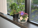 More windowsill plants